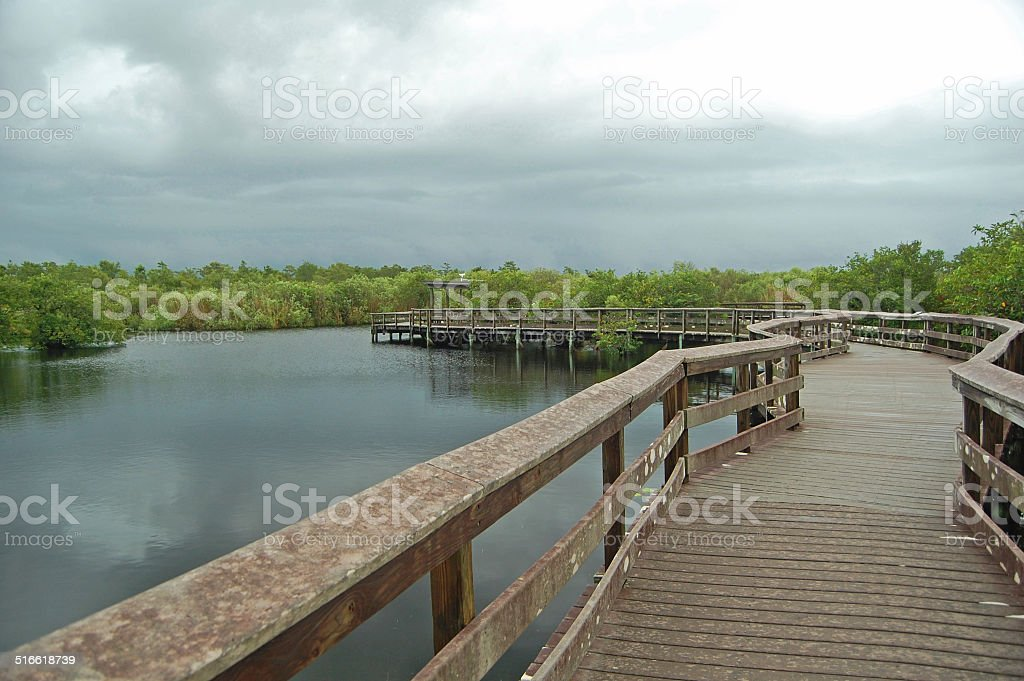 anhinga trail boardwalk stock photo