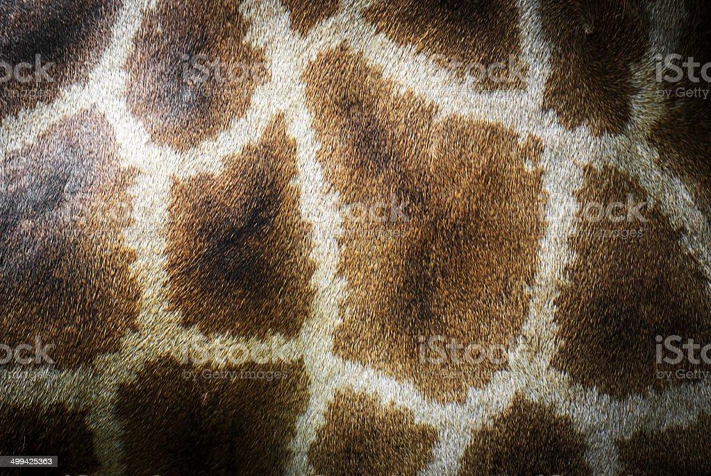 Aniaml Giraffe pattern skin stock photo
