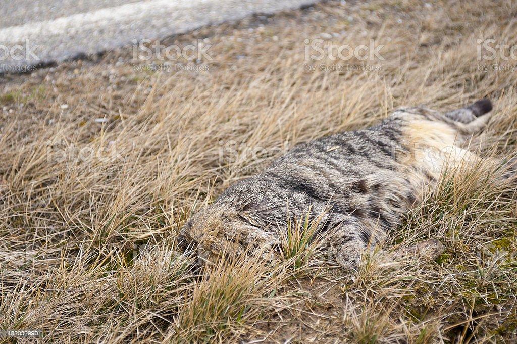 animal Unfall detail – Foto