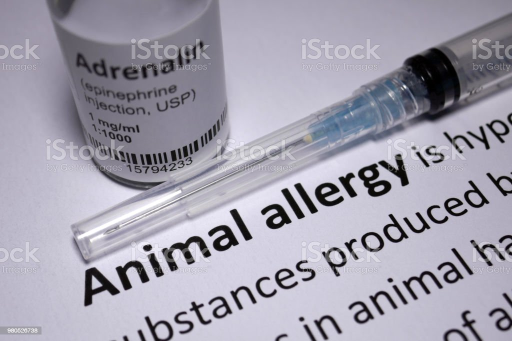 Animal Allergy anaphylactic shock stock photo