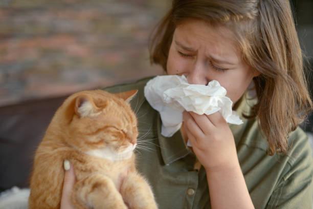 Animal allergy picture id1184832083?b=1&k=6&m=1184832083&s=612x612&w=0&h=bg8deeo9pe27ttdu wpx5oapa2nsdioyub8zsaes8hi=