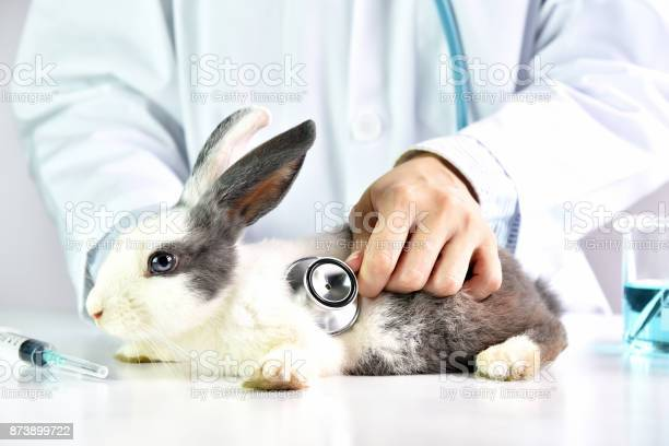 Animal and healthcare concept veterinarian is examining a cute rabbit picture id873899722?b=1&k=6&m=873899722&s=612x612&h=wgwezgh0fmjvhefkznj6p3xu6zarhlhbxihssdagqry=