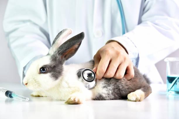 Tier- und medizinisches Konzept, Tierarzt eine niedlichen Kaninchen im Krankenhaus untersucht. – Foto