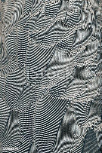 istock animal background 653539080