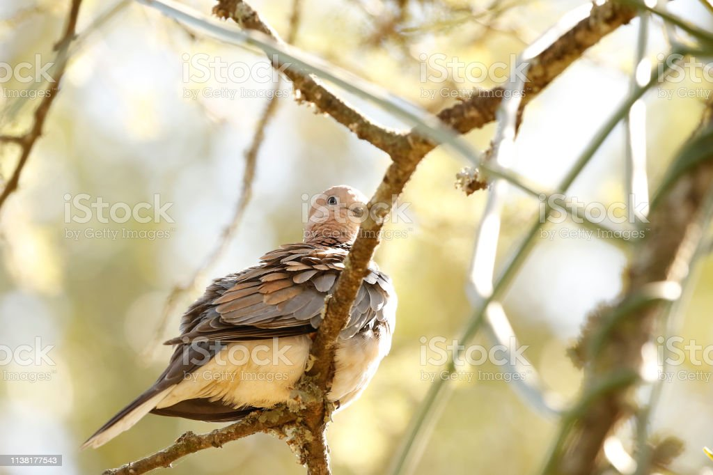 Animal bird dove trees nature calm wildlife morning sunrise sitting