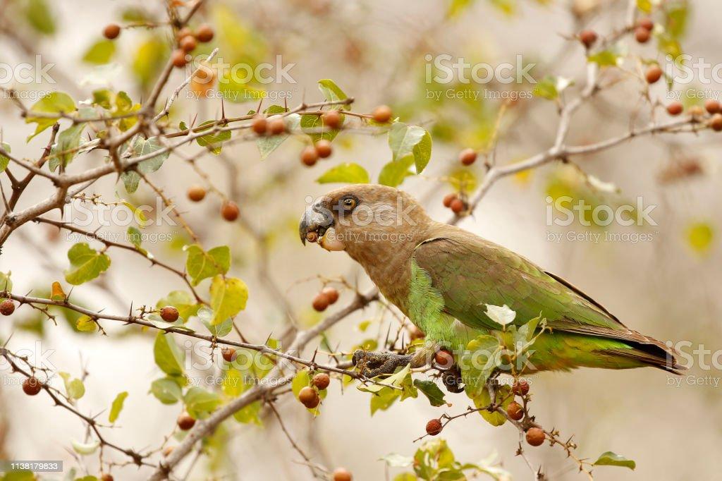 Animal bird parrot green nature wildlife tree fruit eating feathers