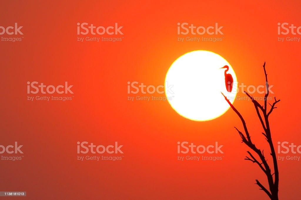 Animal bird sunset sunrise heron silhouette sky red Africa wildlife...