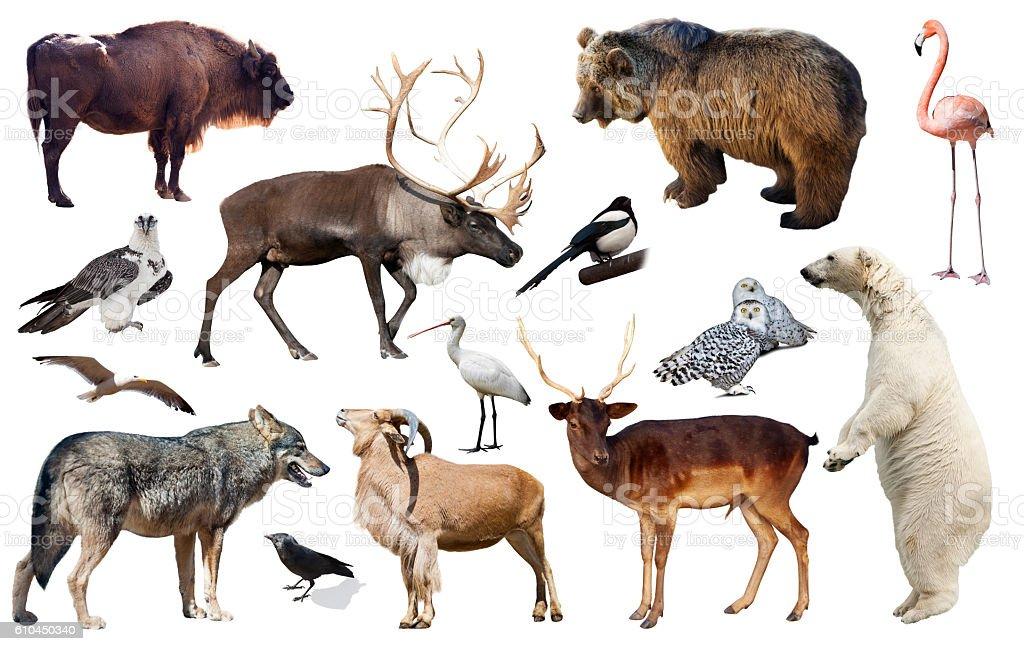 assortment of many European wild birds and mammal animals isolated on...