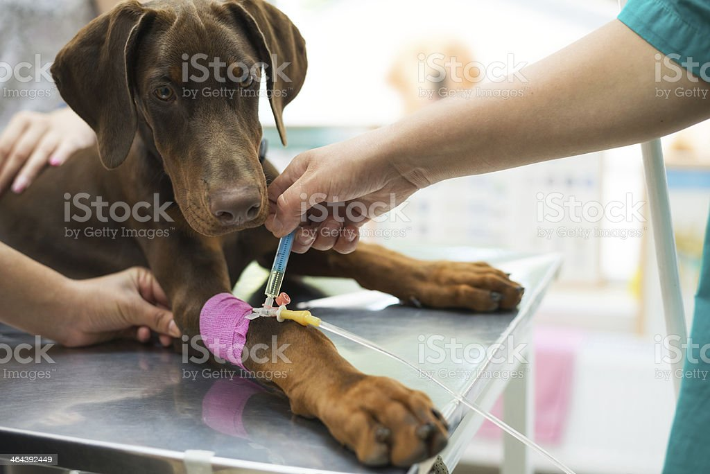 Animal care royalty-free stock photo
