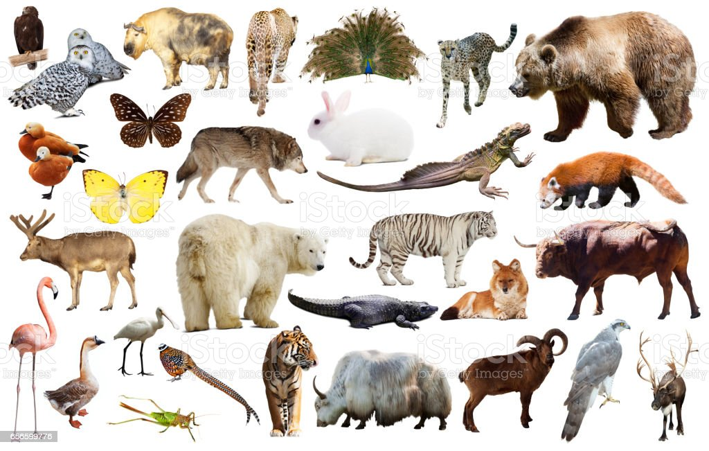 animal collection asia stock photo