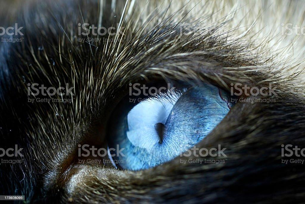 Animal eye close up royalty-free stock photo