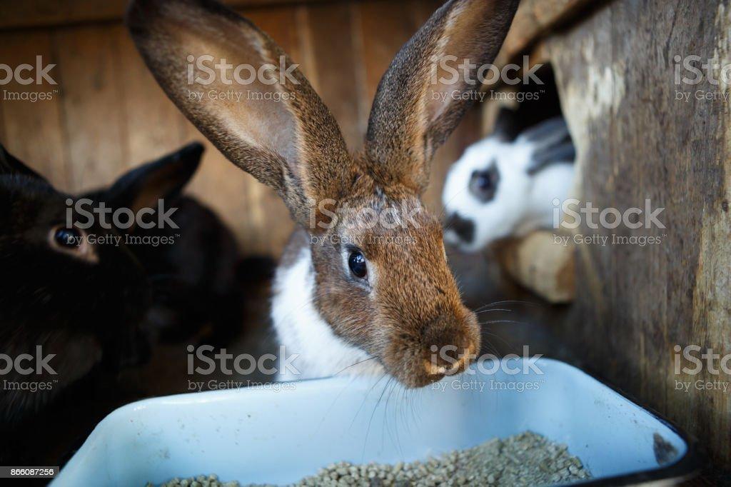 Animal farm cage.Rabbits growing in livestock farm incubator stock photo
