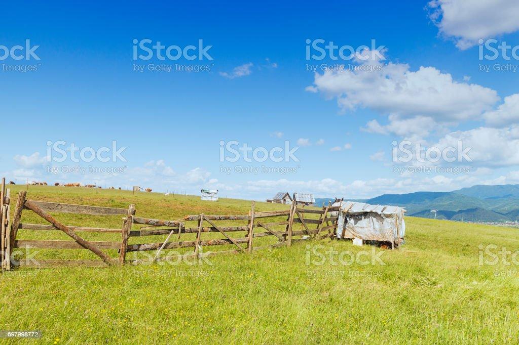 Animal Farm Carpathian Mountains Rasnov Romania stock photo