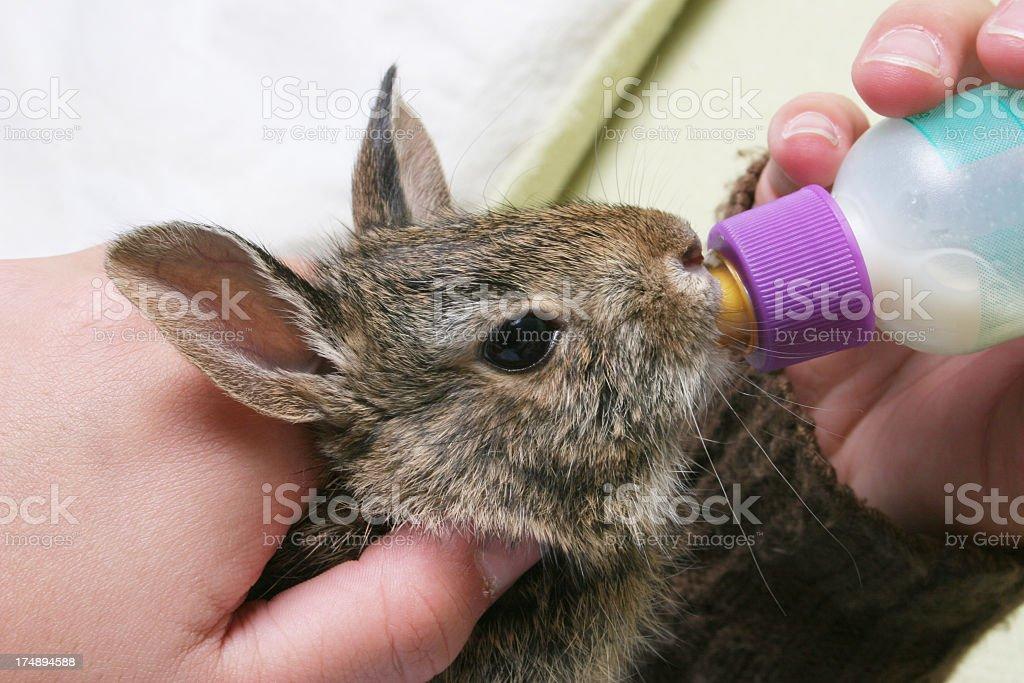 Animal Feeding royalty-free stock photo
