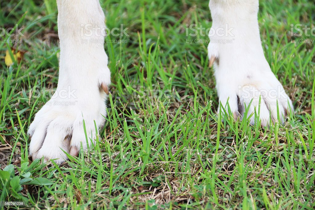 Animal feet stock photo