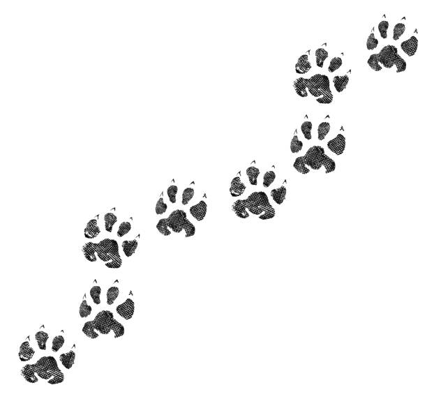 Animal footprint isolated on white background picture id1148309606?b=1&k=6&m=1148309606&s=612x612&w=0&h=i9 o6l9osh4xovzlq8bha7n e5anfl59goxosvhdnos=