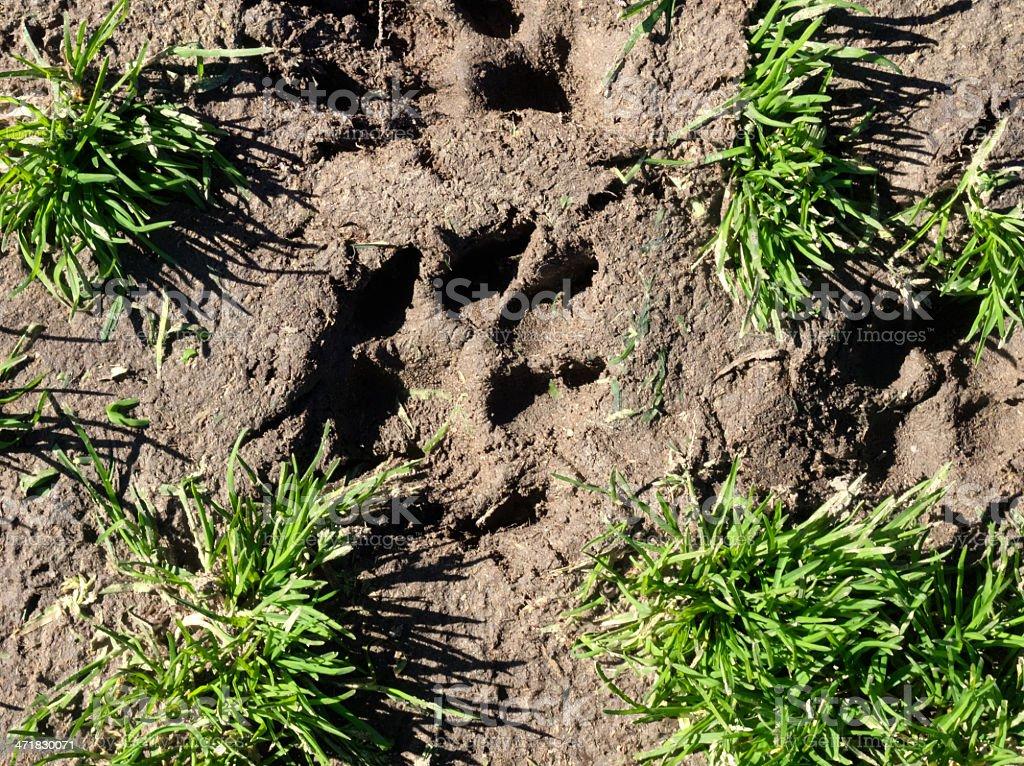 animal footprint royalty-free stock photo