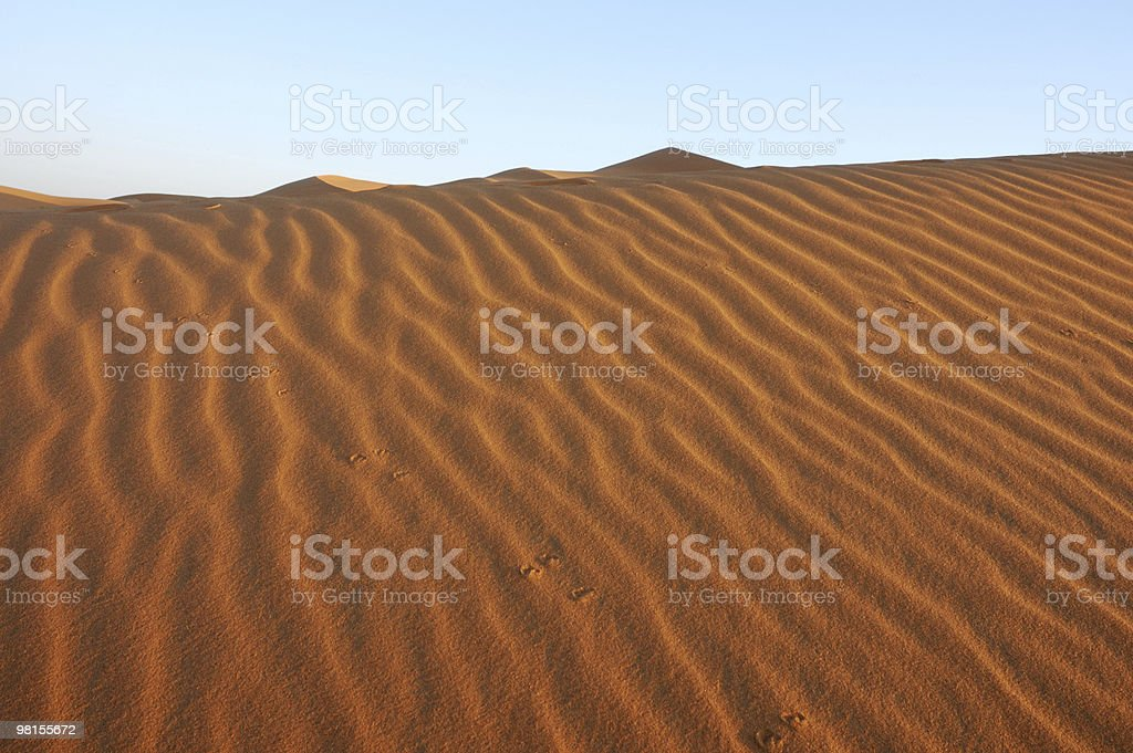 Animal footprints in the dune royalty-free stock photo