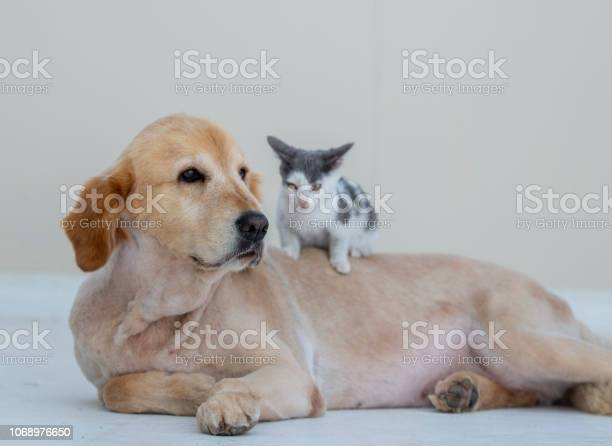 Animal friendship picture id1068976650?b=1&k=6&m=1068976650&s=612x612&h=1ld50nuhchyv8fucltremvwp6wbngr1caawsakfxvhi=