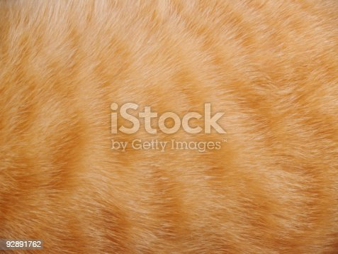 animal fur background.
