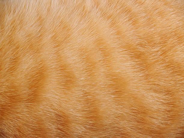 Animal fur background picture id92891762?b=1&k=6&m=92891762&s=612x612&w=0&h=2c4ka 5wvpypcqwqf2vleacr5k2p25i7 kryy6apzcs=