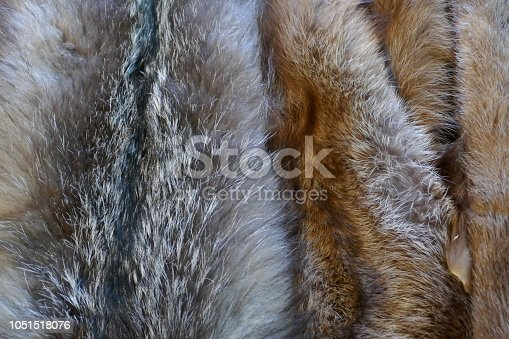 Animal fur skin abstract