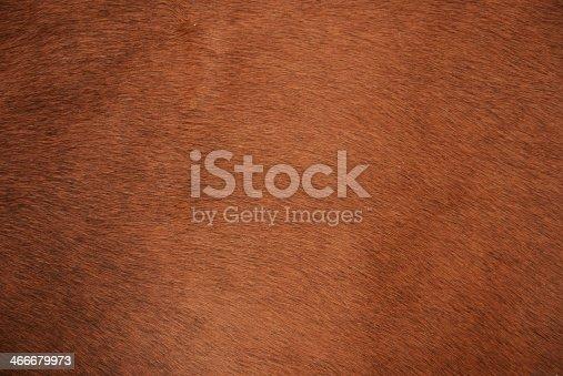 istock Animal fur 466679973