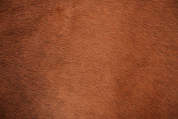 Animal fur Brown natural cow fur texture cowhide stock pictures, royalty-free photos & images