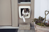 animal going through cat door