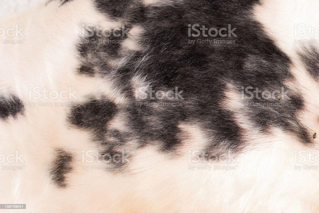 Animal hair royalty-free stock photo