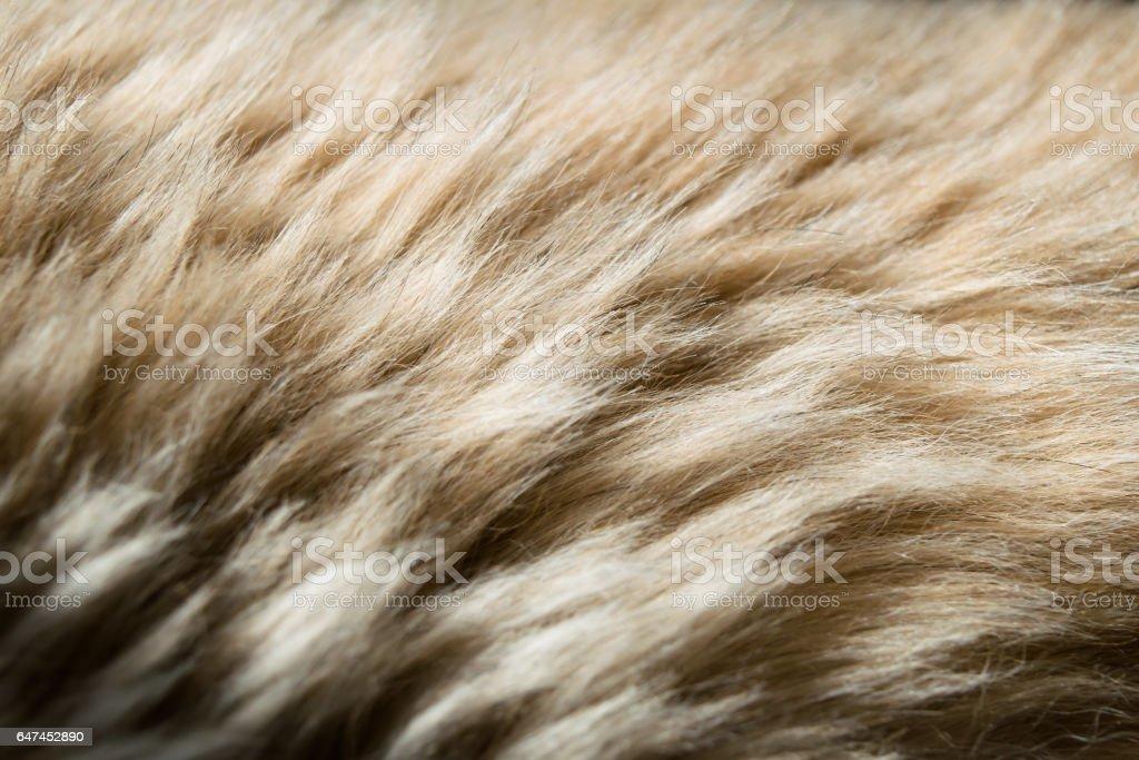 Animal hair. Fur background. Closeup. Texture.