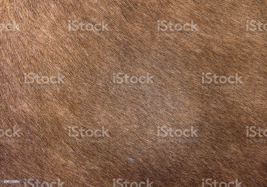 Animal hair skin texture stock photo