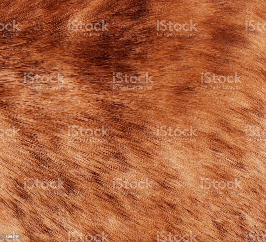 High resolution image of actual animal hair surface with plenty of...