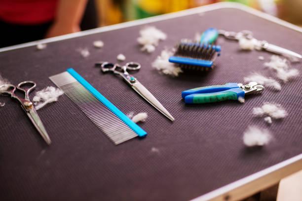 Animal hairdressing tools on a table surrounded by cut fur in an picture id943554640?b=1&k=6&m=943554640&s=612x612&w=0&h=w17evq3xdxy6yehyycgcoido93vfwfwkq1gmygtzgak=