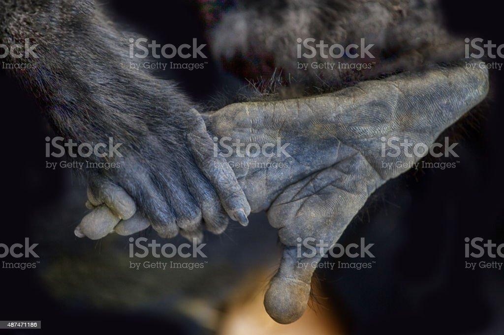Monkey animal hand