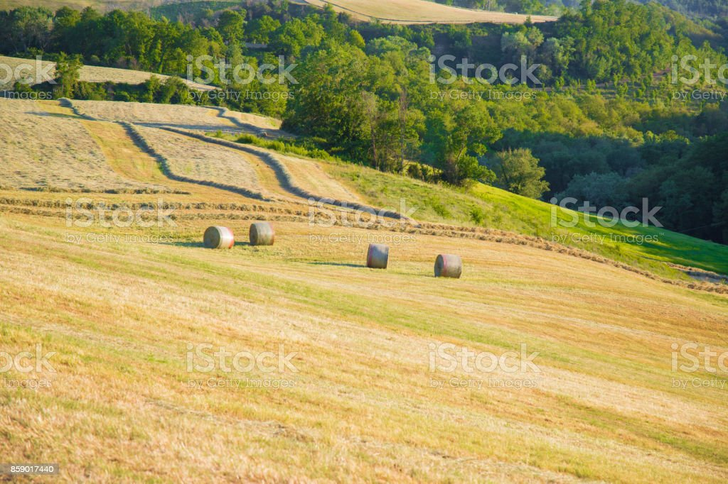 Animal hay rolls, in the hills stock photo