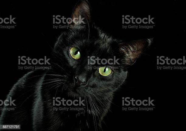 Animal head picture id537121731?b=1&k=6&m=537121731&s=612x612&h=cwbrluypcujnfee95w  okrxfy thp8ufode uflsfm=