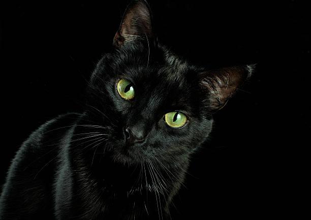 Animal head picture id537121731?b=1&k=6&m=537121731&s=612x612&w=0&h=vl3qwjhaixn5irn8ue4ycezebsrdtzcl6st71ulqepo=