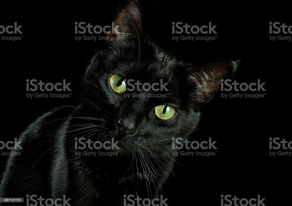 animal head stock photo