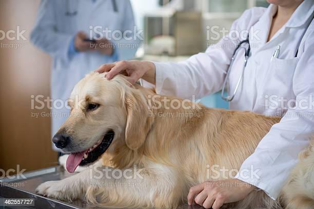 Animal health care professionals picture id462557727?b=1&k=6&m=462557727&s=612x612&h=7mhuefw0bw2xin8ya2twldlgkgxt4qyn5zuahlxd2di=