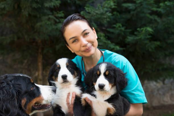animal hospital - allevatore foto e immagini stock
