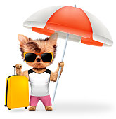 Funny animal in t-shirt and shorts holding umbrella and baggage. Concept summer holidays, travel vacation concept. Realistic 3D illustration.