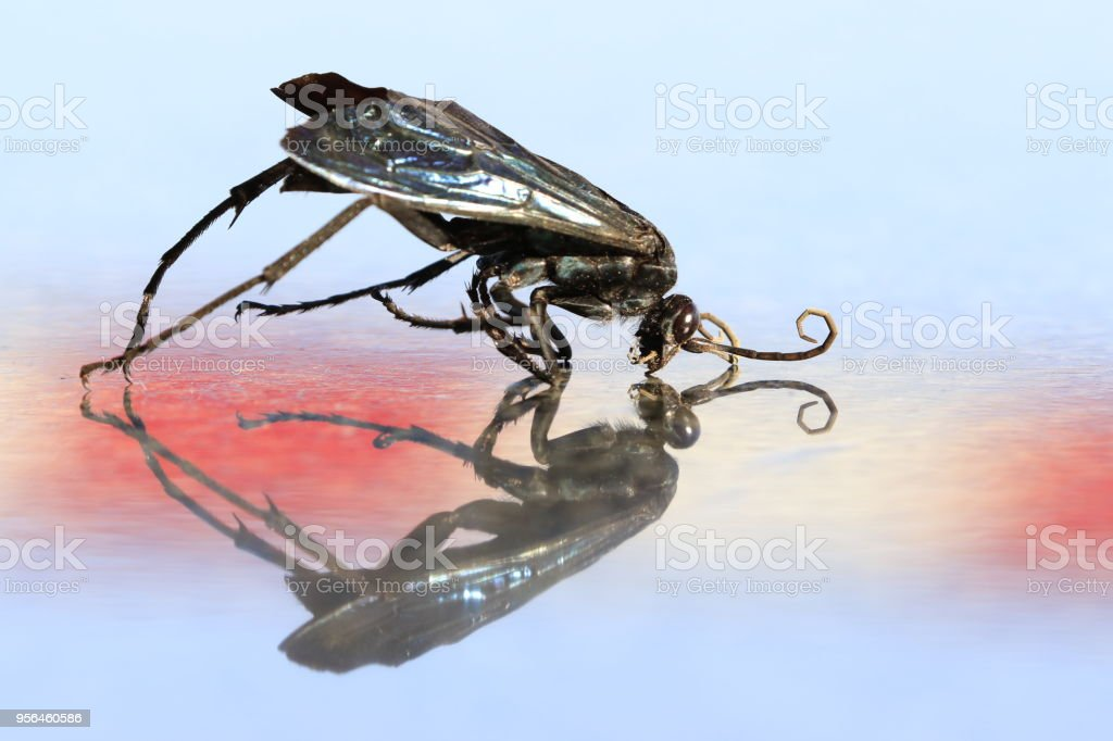 Animal insect hornet wasp dead reflection color wings sunshine black