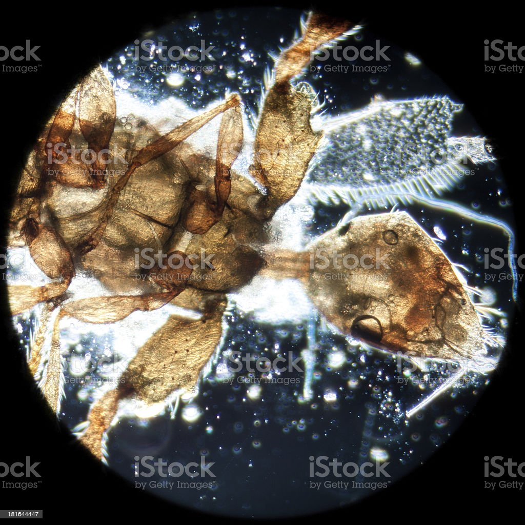 animal insect stock photo