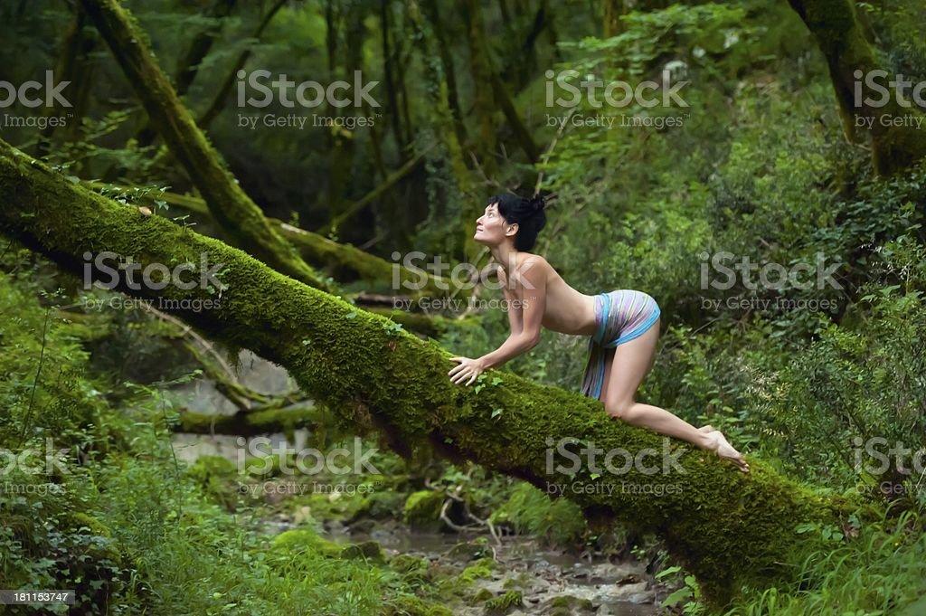 El instinto Animal - foto de stock