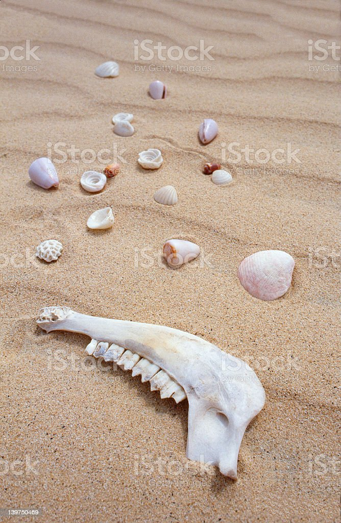 Animal Jaw And Shells royalty-free stock photo