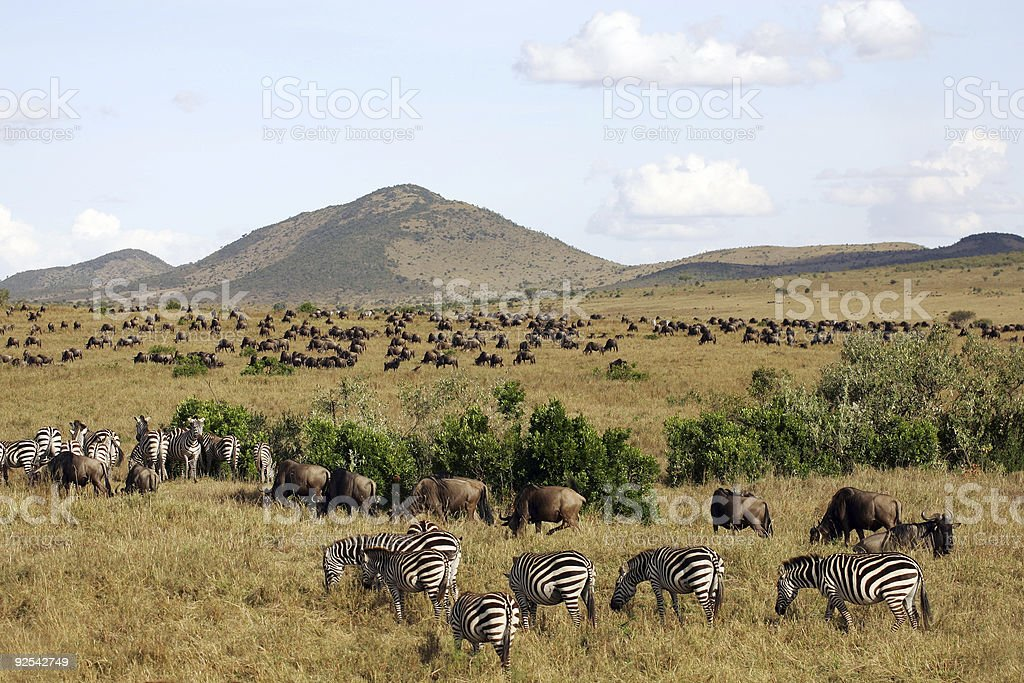 Animal Landscape on the Masai Mara stock photo