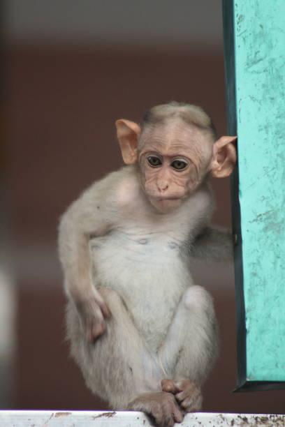 vie animale - jungle menu photos et images de collection