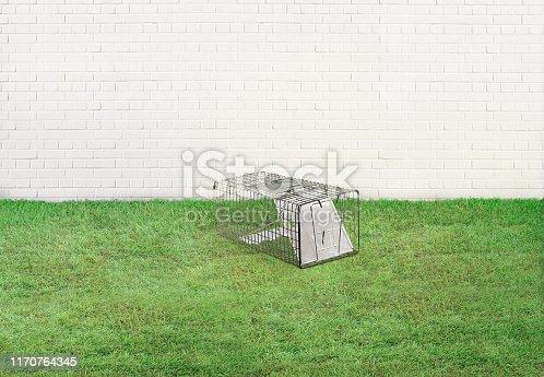 animal trap in a garden