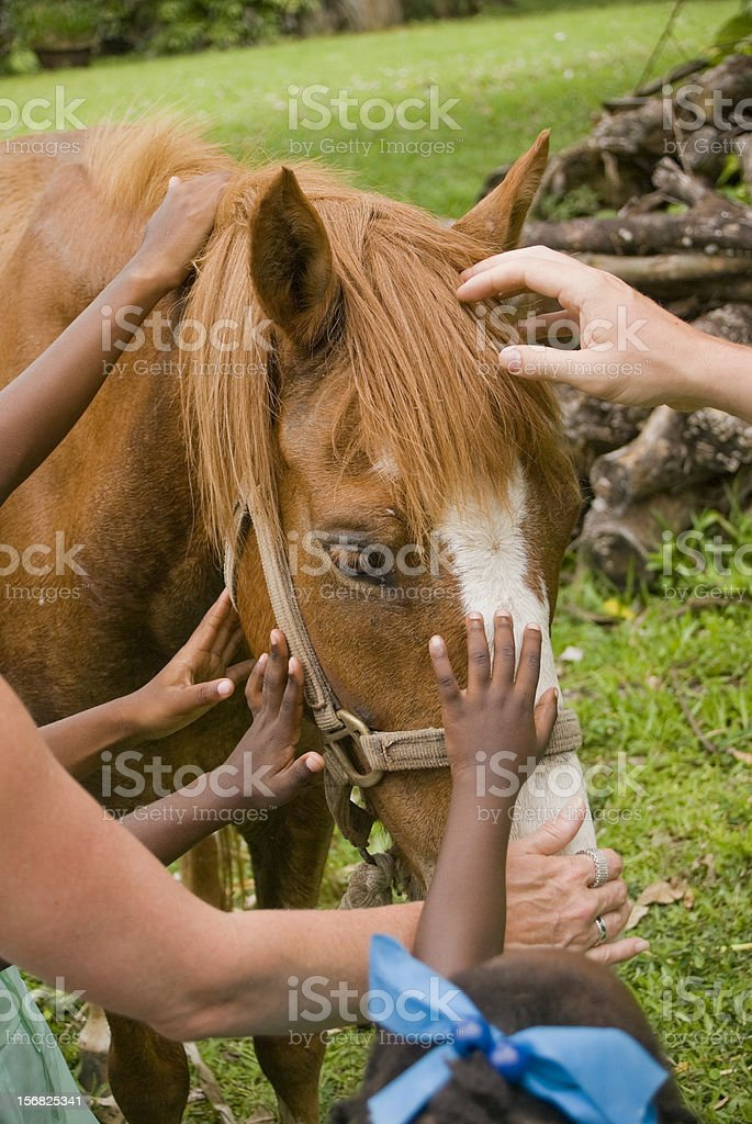 animal lovers petting horse stock photo